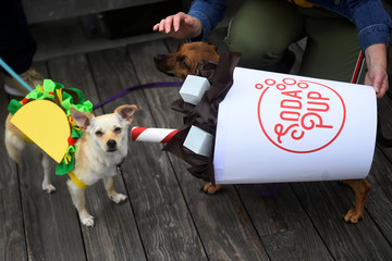 Chihuahua dogs dressed as a Taco and a Soda Pup are seen before participating in a fancy dressed dog competition during the 'Running of the Chihuahuas' event as part of Cinco de Mayo celebrations in Washington