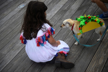 A girl looks at a Chihuahua dog dressed as a Taco before participating in a fancy dressed dog competition during the 'Running of the Chihuahuas' event as part of Cinco de Mayo celebrations in Washington