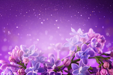 Klistermärke - Lilac flowers bunch violet art design background. Beautiful violet Lilac flowers closeup. Watercolor nature floral backdrop