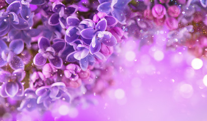Affisch - Lilac flowers bunch violet art design background. Beautiful violet Lilac flowers closeup. Watercolor nature floral backdrop
