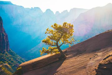 Small Tree Growing on Mountain 3 Fototapete