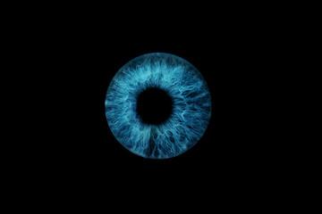 In de dag Iris dunkelblaue Iris