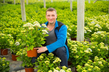Positive man florist looking for plant of  hortensia in pots while gardening