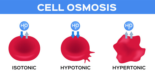 blood and cell osmosis vector / isotonic hypotonic and hypertonic
