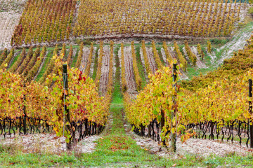 autumn vineyards in Rhona region
