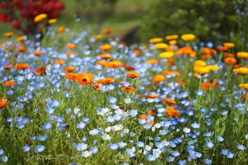 牛久大仏と花