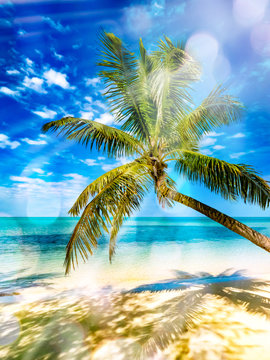 Coconut palm tree above white sand and turquoise tropical sea