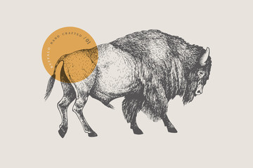 Hand drawing of American bison on a light background. Buffalo in vintage engraving style. Vector retro illustration.