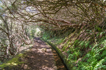 Levada walk in Madeira in a summer sunny day through the forest path