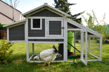 A hen house or chicken coop with hens