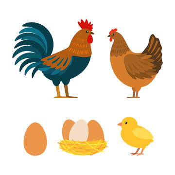 Set of chicken, rooster, eggs. Flat vector illustration isolated