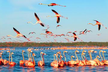 In de dag Flamingo Many pink beautiful flamingos in a beautiful blue lagoon. Mexico. Celestun national park.