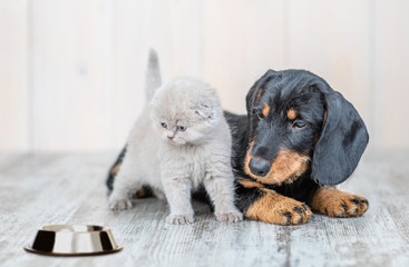 Fototapeta Baby kitten sitting with dachshund puppy on the floor at home looking on empty bowl obraz