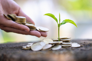 Hand giving a coin to a tree growing from pile of coins.Plant Growing In Savings Coins Money. Financial accounting, Investment Concept.