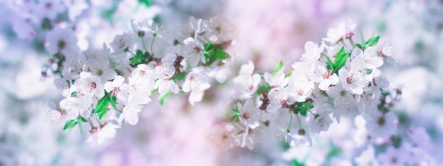Abstract floral background. Delicate spring flowers in pastel colors. Banner background with copy...