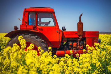 Wall Mural - Working tractor on Sunrise over the rapeseed field, beautiful spring day.