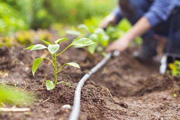 lavori nell'orto con irrigazione a goccia