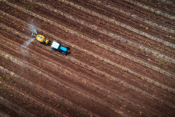 Wall Mural - Aerial view of tractor spraying vineyard with fungicide.