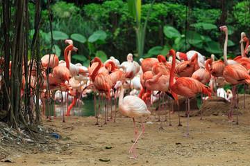 A flock of flamingos
