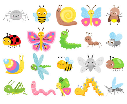 Cute insects. Big set of cartoon insects for kids and children. Butterflies, snail, spider, moth and many other