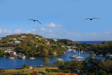 Port of St. Lucia with flying Frigate birds, Lesser Antilles , view from a cruise ship