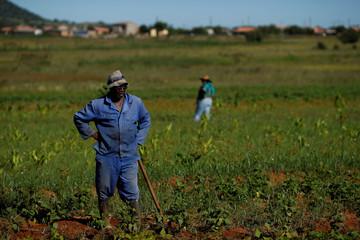 Nyuselo Jali, chairman of BlueDisa, takes a break at his land in Lawley informal settlement