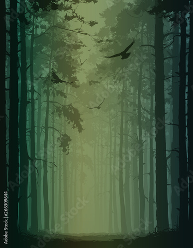 Wall mural birds in the forest