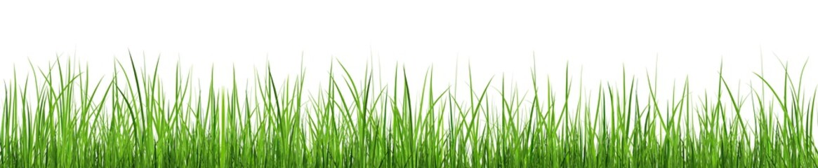A bunch of green grass isolated on white background