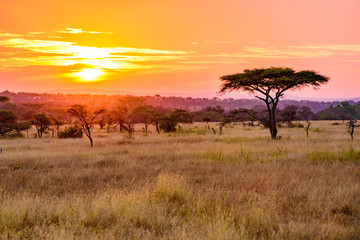 Sunset in savannah of Africa with acacia trees, Safari in Serengeti of Tanzania