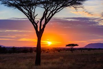 Keuken foto achterwand Chocoladebruin Sunset in savannah of Africa with acacia trees, Safari in Serengeti of Tanzania