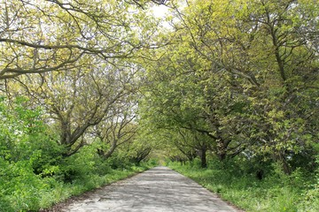 Picturesque road with high trees