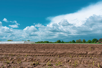 Landschaft mit Spargelfeld im Vordergrund bei blauem Wolkenhimmel. Standort: Deutschland, Nordrhein-Westfalen, Heiden