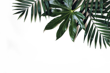 Exotic nature styled photo, jungle composition. Green palm and aralia leaves isolated on white table background. Tropical summer holiday, vacation concept. Flat lay, top view. Floral frame, web banner