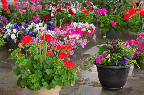 Colorful Potted Plants at an Outdoor Market