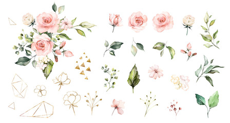 Set watercolor elements of roses collection garden  pink flowers, leaves, branches, Botanic  illustration isolated on white background.