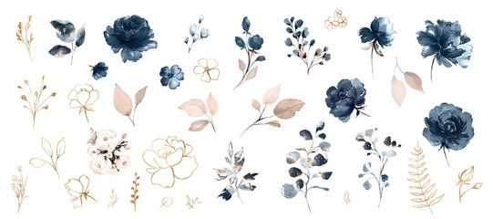 Set watercolor design elements of roses collection garden navy blue flowers, leaves, gold branches, Botanic  illustration isolated on white background. Wall mural