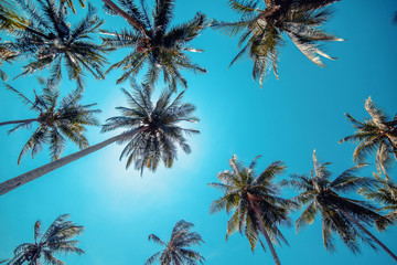Fotobehang Palm boom Tall royal palm trees line up against bright blue tropical sky