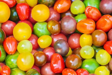 Fresh cherry tomatoes in different colors