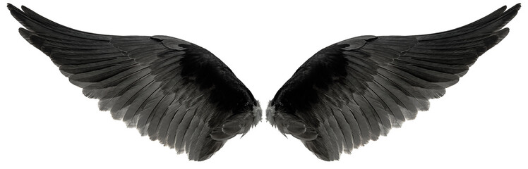 eagle wings isolated on a white