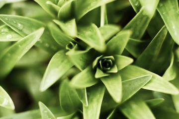 Green plants in garden.