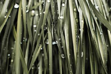 Close-up of wet green grass