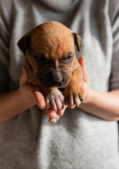 Woman holding and cudling cute little puppy in her hands.