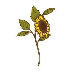 beautiful sunflower isolated icon