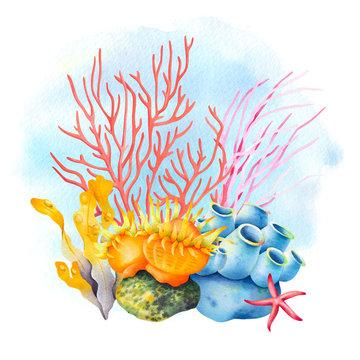 Sea sponge, anemone, starfish, red and pink coral. Tropical ocean reef wildlife. Watercolor illustration.