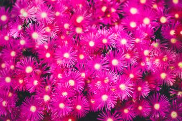 Aluminium Prints Pink nature poster. blooming flowers