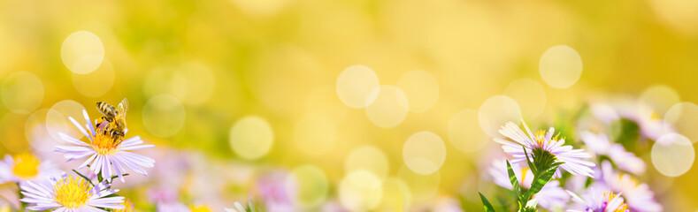 Banner, Panorama  -  Blumen mit Biene im Garten, Insektenweide