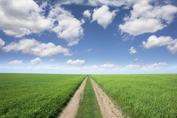 Rural road or pathway through green wheat field, landscape with blue sky in a spring day