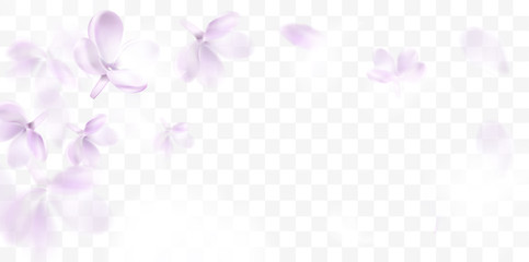 Fototapeta Floral spring background with purple lilac flowers