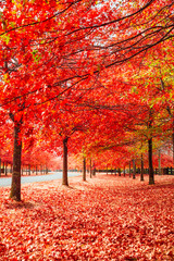 Printed roller blinds Brick Beautiful Trees in Autumn Lining Streets of Town in Australia