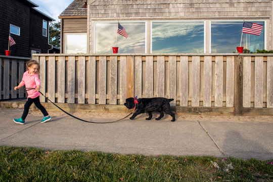 A toddler aged girl walking a dog past a fence with United States Flags on it.